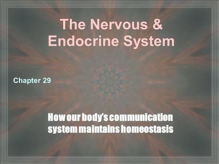 The Nervous & Endocrine System How our body's communication system maintains homeostasis Chapter 29.