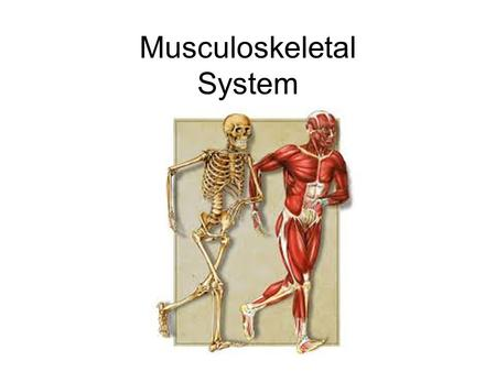 Musculoskeletal System. Why is locomotion essential to most organisms? Motile vs. Sessile –Get food –Move away from harmful things and predators –Seek.