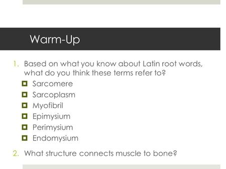 Warm-Up 1.Based on what you know about Latin root words, what do you think these terms refer to?  Sarcomere  Sarcoplasm  Myofibril  Epimysium  Perimysium.