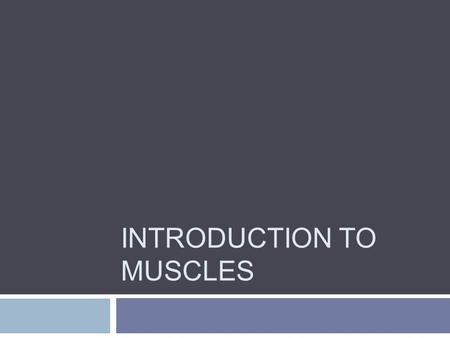 INTRODUCTION TO MUSCLES. Functions  Movement  Stabilization of Joints  Posture  Thermogenesis.