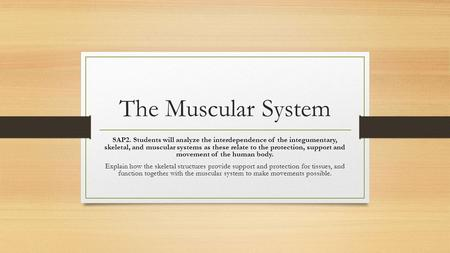 The Muscular System SAP2. Students will analyze the interdependence of the integumentary, skeletal, and muscular systems as these relate to the protection,