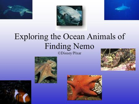 Exploring the Ocean Animals of Finding Nemo ©Disney/Pixar.