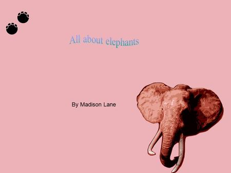 By Madison Lane. Welcome home Elephants sometimes live Africa were it is very hot. The elephant lives in a place that has some water. Elephants homes.