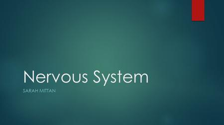 Nervous System SARAH MITTAN. Central & Peripheral Nervous system  CNS is responsible for integrating sensory information and responding accordingly 
