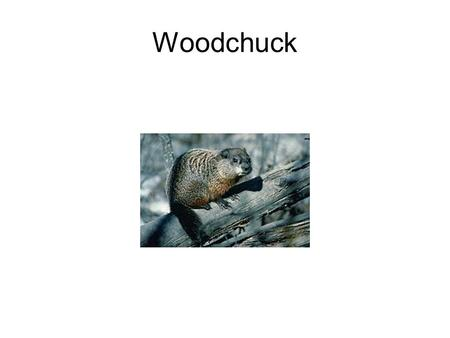 Woodchuck. Whitetail Deer Opossum Red Squirrel White ring around the eye.