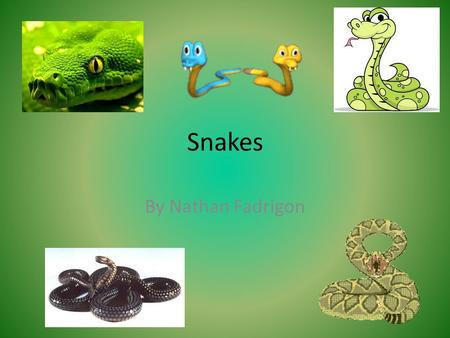 Snakes By Nathan Fadrigon. Constrictors need a lot of muscle to squeeze their prey in order to kill it.
