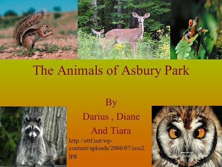 The Animals of Asbury Park By Darius, Diane And Tiara  content/uploads/2006/07/zoo2. jpg.