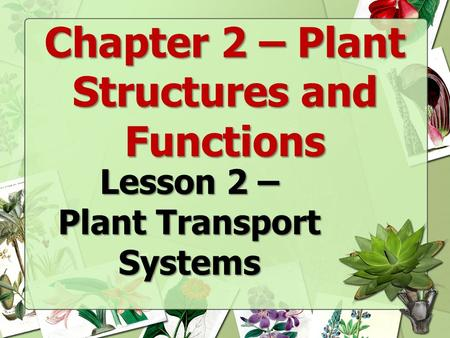 Chapter 2 – Plant Structures and Functions Plant Transport Systems