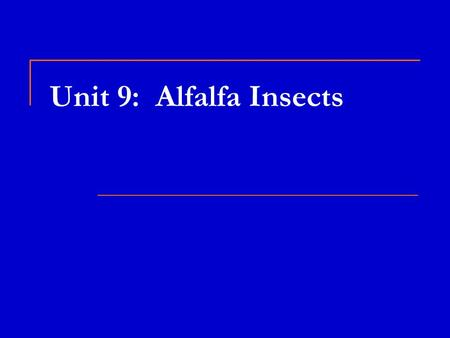 Unit 9: Alfalfa Insects. Alfalfa Weevil  Found throughout the U.S.  Damage done by larvae feeding on plant tips, new leaves, flowers  Can strip the.