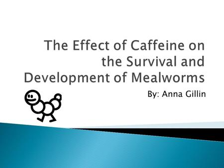 By: Anna Gillin.  How does caffeine effect the growth, survival, and development of mealworms?