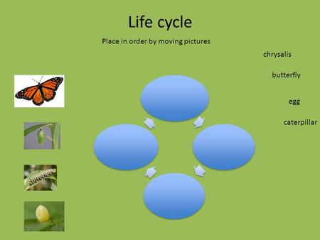Life cycle Place in order by moving pictures caterpillar butterfly egg chrysalis.