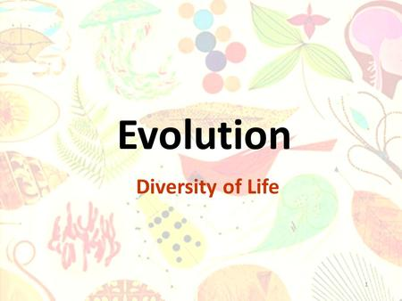 1 Evolution Diversity of Life. Charles Darwin (1800's) was an English naturalist who developed the theory of evolution by natural selection. This theory.