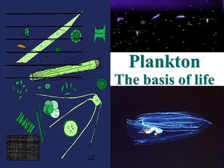 Plankton The basis of life. Objectives Definition Functional groups. Phytoplankton. Zooplankton Bacterioplankton. Ecological factors affecting plankton.