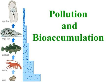 Pollution and Bioaccumulation.