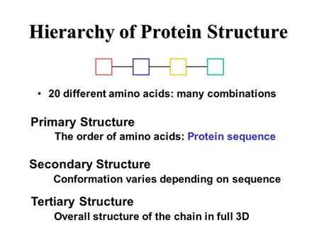 Hierarchy of Protein Structure