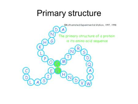 Primary structure. Proteins Proteins contain Carbon (C), Hydrogen (H), Oxygen, Nitrogen (N) and sometimes Sulphur (S) The monomer units of proteins are.