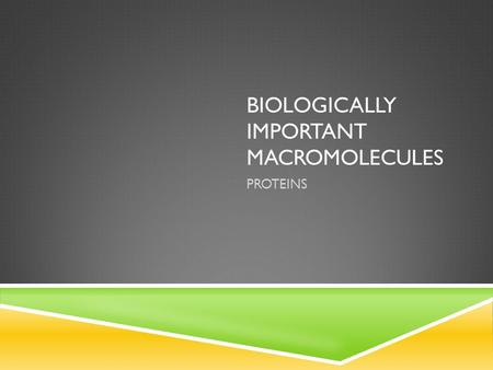 BIOLOGICALLY IMPORTANT MACROMOLECULES PROTEINS. A very diverse group of macromolecules characterized by their functions: - Catalysts - Structural Support.
