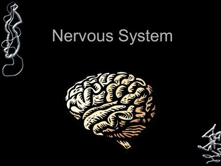 Nervous System. NERVOUS SYSTEM Two Parts Central (CNS) Peripheral (PNS)