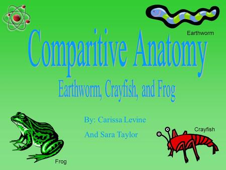 By: Carissa Levine And Sara Taylor Earthworm Frog Crayfish.