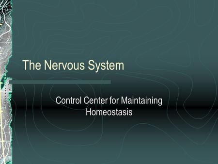 The Nervous System Control Center for Maintaining Homeostasis.