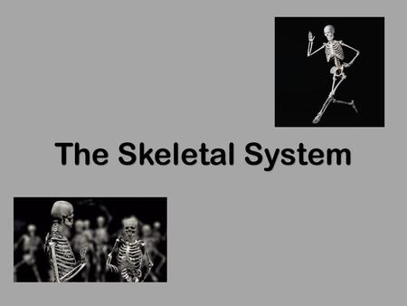 The Skeletal System. Copyright © 2003 Pearson Education, Inc. publishing as Benjamin Cummings  Parts of the skeletal system 1. Bones (skeleton) 2. Joints.