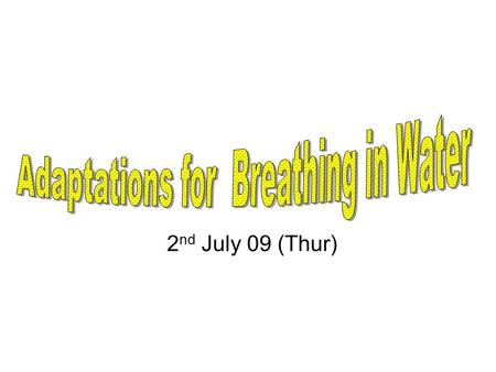 2 nd July 09 (Thur). Lesson Objective At the end of the lesson, pupils are able to: Show awareness of animals' adaptations for breathing in water.