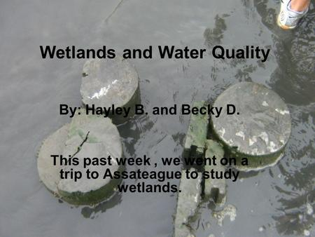 Wetlands and Water Quality By: Hayley B. and Becky D. This past week, we went on a trip to Assateague to study wetlands.