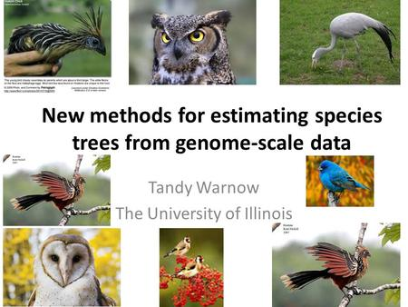 New methods for estimating species trees from genome-scale data Tandy Warnow The University of Illinois.