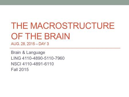 THE MACROSTRUCTURE OF THE BRAIN AUG. 28, 2015 – DAY 3 Brain & Language LING 4110-4890-5110-7960 NSCI 4110-4891-6110 Fall 2015.
