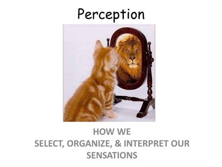 Perception HOW WE SELECT, ORGANIZE, & INTERPRET OUR SENSATIONS.