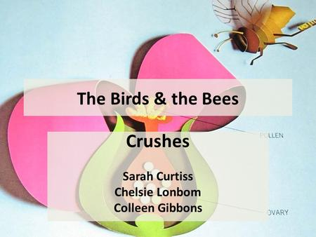 The Birds & the Bees Crushes Sarah Curtiss Chelsie Lonbom Colleen Gibbons.