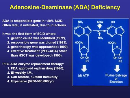 Adenosine-Deaminase (ADA) Deficiency ADA is responsible gene in ~20% SCID. Often fatal, if untreated, due to infections. It was the first form of SCID.