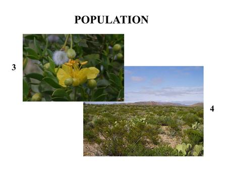3 4 POPULATION. 2 1 POPULATIONS: Distribution 5 POPULATIONS: Abundance (including Density)
