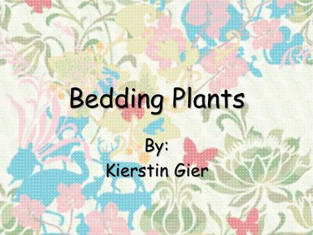 Bedding Plants By: Kierstin Gier. Ageratum houstonianum Floss Flower.