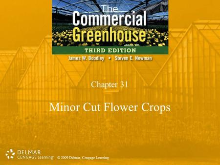 © 2009 Delmar, Cengage Learning Chapter 31 Minor Cut Flower Crops.