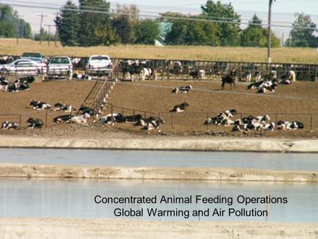 Concentrated Animal Feeding Operations Global Warming and Air Pollution.