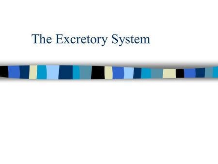 The Excretory System.
