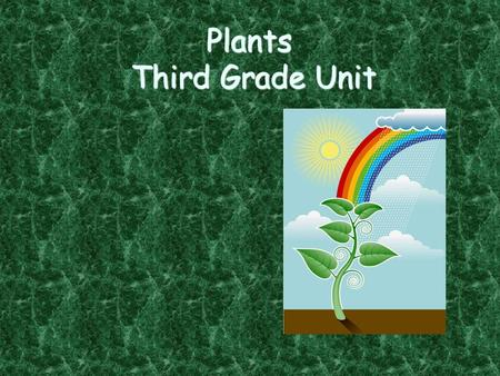 Plants Third Grade Unit Plants Word Wall Inside a Seed Moving Seeds Good for Us? Parts of a Plant What plants need Jeopardy.