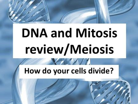 DNA and Mitosis review/Meiosis How do your cells divide?