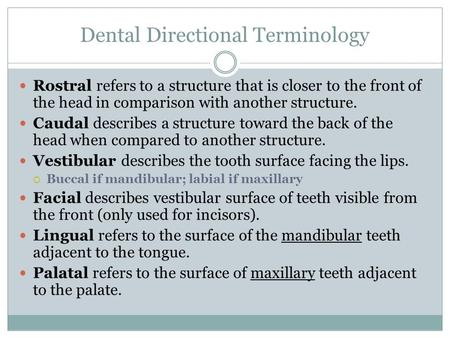 Dental Directional Terminology Rostral refers to a structure that is closer to the front of the head in comparison with another structure. Caudal describes.