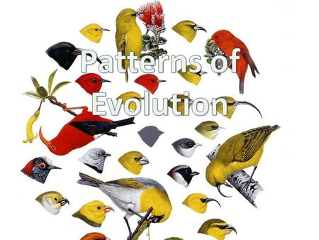 Patterns of Evolution.