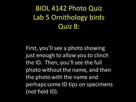 BIOL 4142 Photo Quiz Lab 5 Ornithology birds Quiz B: First, you'll see a photo showing just enough to allow you to clinch the ID. Then, you'll see the.