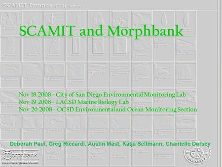 SCAMIT and Morphbank Nov 18 2008 - City of San Diego Environmental Monitoring Lab Nov 18 2008 - City of San Diego Environmental Monitoring Lab Nov 19 2008.