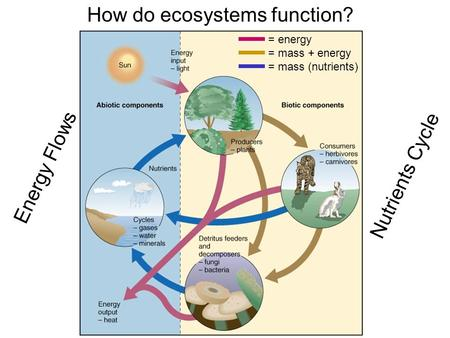 How do ecosystems function? Energy Flows Nutrients Cycle = energy = mass + energy = mass (nutrients)