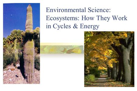 Environmental Science: Ecosystems: How They Work in Cycles & Energy.