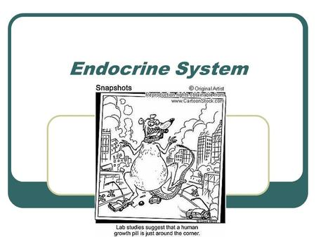 "Endocrine System. Endocrine – ""ductless glands"" Secretions directly enter blood and travel to every body organ But not all cell respond…only target cells."