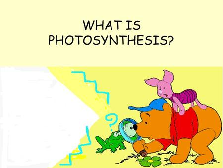 WHAT IS PHOTOSYNTHESIS? Animals get their energy from the food they eat through the process of respiration with the help of the digestive system, the.