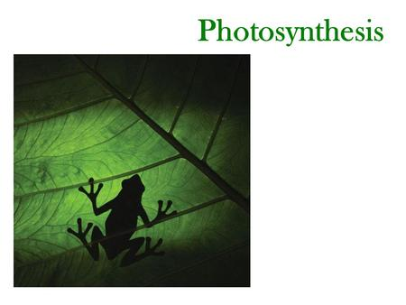 Photosynthesis. 12+ 6 Water Photosynthesis (An Overview) Plants, certain protists and photosynthetic bacteria have photosynthetic activities. They make.