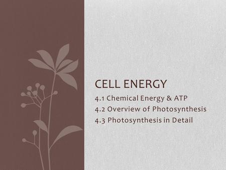 4.1 Chemical Energy & ATP 4.2 Overview of Photosynthesis 4.3 Photosynthesis in Detail CELL ENERGY.