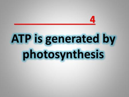 4 1. In 1954 Daniel Arnon (Berkeley) discovered that when suspended thylakoid membranes are illuminated, ATP is formed from ADP and inorganic phosphate.